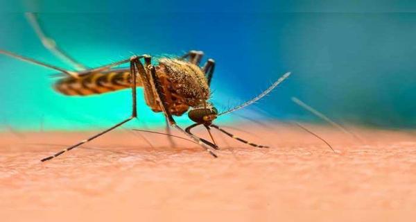 डेंगू का का कहर: 1 दिन में 11 नए मरीज मिले