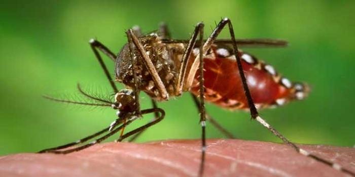 अब स्कूली बच्चों को कोरोना से ज्यादा डेंगू का खतरा